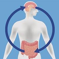 پروبیوتیک ها و تقویت خلق و خوی و عملکرد شناختی